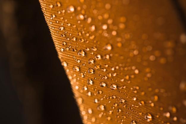 Gotas de agua sobre fondo marrón con textura de plumas