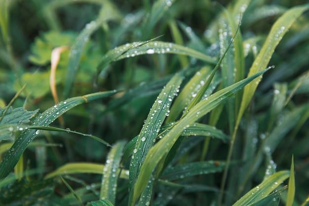 Gotas de agua sobre la hierba verde
