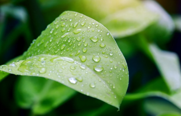 Gotas de agua sobre las hojas verdes hermosa naturaleza después de la lluvia