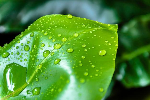 Gotas de agua sobre hojas verdes.