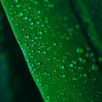 Gotas de agua sobre la superficie del plumaje verde.