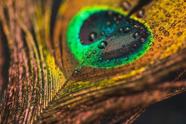Gotas de agua sobre el telón de fondo de plumas de pavo real