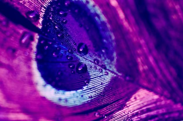 Gotas de agua sobre los vibrantes fondos de plumas azules y rosas
