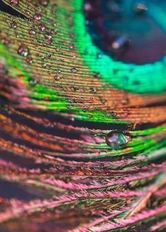 Gotas de agua en el telón de fondo colorido plumaje
