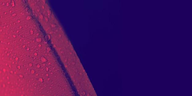 Gotas de agua en la textura de la pluma roja sobre fondo de color