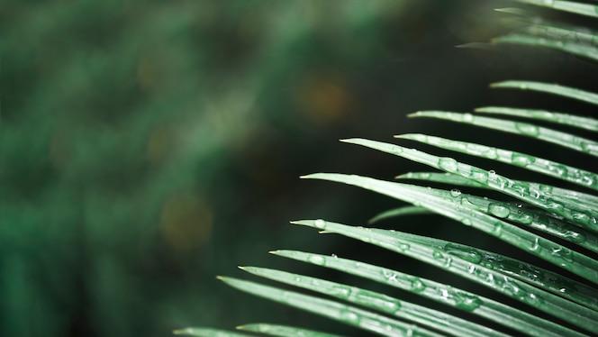 Gotas de agua en la hoja de palma