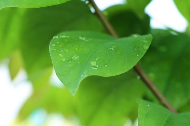 Gotas en las hojas.