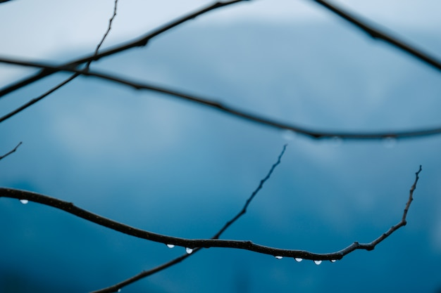 Gotas de lluvia rama de un árbol seco