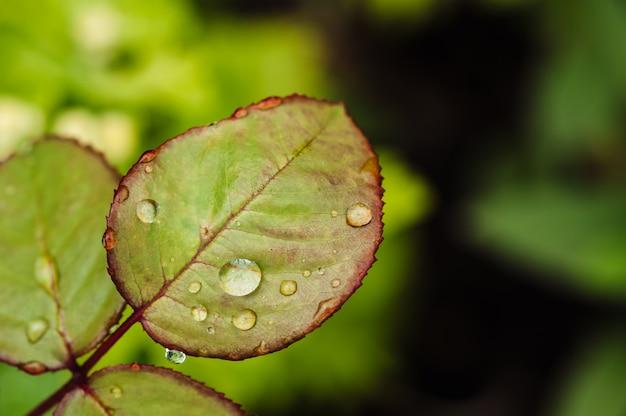 Las gotas de lluvia en rosa verde salen del primer.