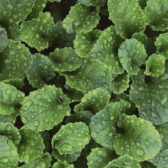 Gotas de lluvia sobre hojas verdes frescas. fondo verde con hojas en estilo vintage.