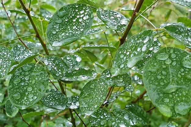 Gotas de lluvia sobre las hojas