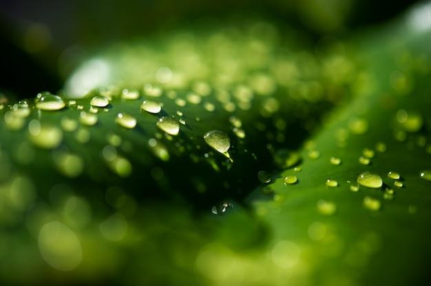 Las gotas de rocío en las hojas no son verdes.