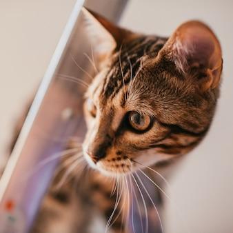 Gracioso gato de bengala juega en la escalera de acero