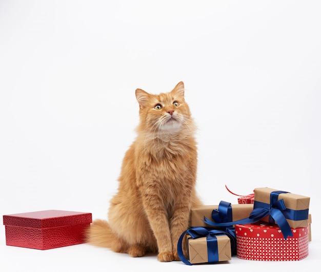 Gracioso gato jengibre adulto sentado en medio de cajas envueltas en papel marrón y atadas con cinta de seda