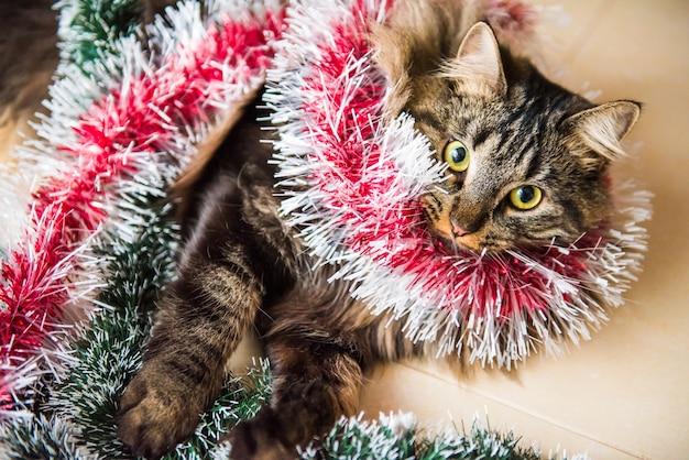 Gracioso gato noruego con guirnaldas bajo el árbol de navidad en año nuevo