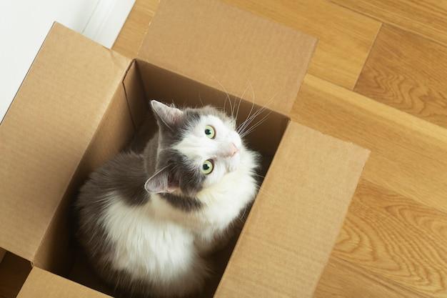 Gracioso gato se sienta en una caja de papel de cartón contra el suelo de parquet