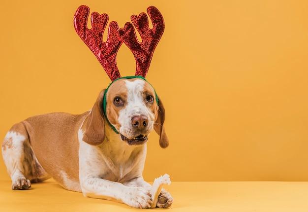 Gracioso perro hermoso con cuernos de reno