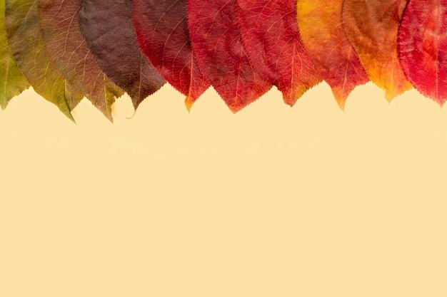 Gradación natural hojas caídas