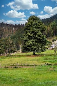 Gran árbol, bosque y cielo azul con nubes en un pueblo