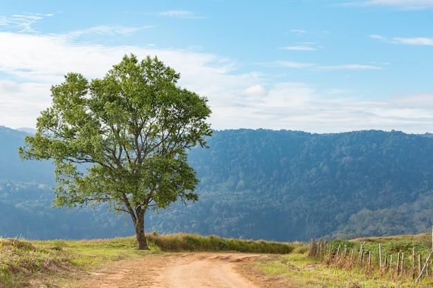 Un gran árbol en el cielo azul.