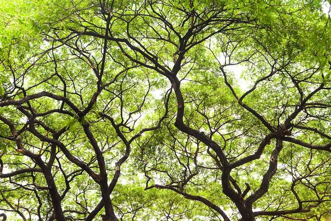 Gran árbol con hermosas ramas.