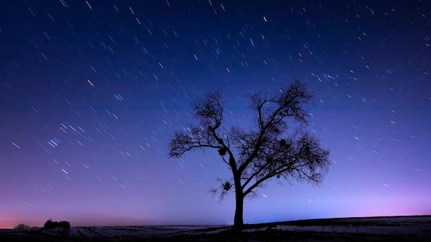 Gran árbol solitario con cielo estrellado.