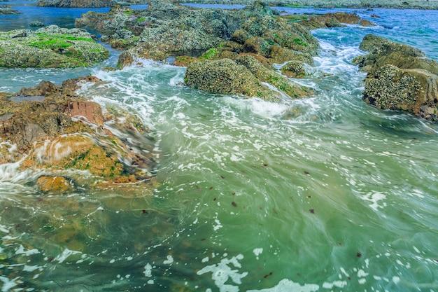 Gran belleza natural de las algas marinas agua