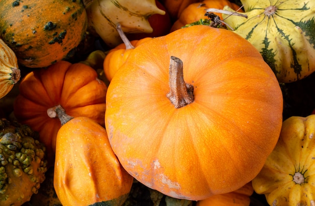 Una gran cantidad de mini calabazas coloridas en otoño en los agricultores al aire libre