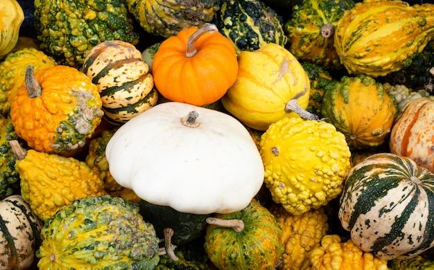 Una gran cantidad de mini calabazas coloridas en otoño en el mercado de agricultores al aire libre