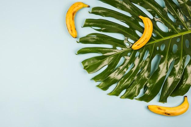 Gran hoja verde de monstera entre plátanos.