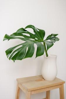 Una gran hoja verde de la planta monstera en una jarra de cerámica blanca sobre un taburete de madera sobre una superficie de pared blanca