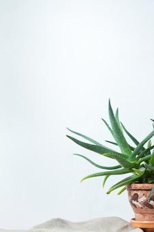 Una gran planta de aloe en una olla de barro con un adorno se encuentra en tela natural en la consola blanca frente a la pared blanca