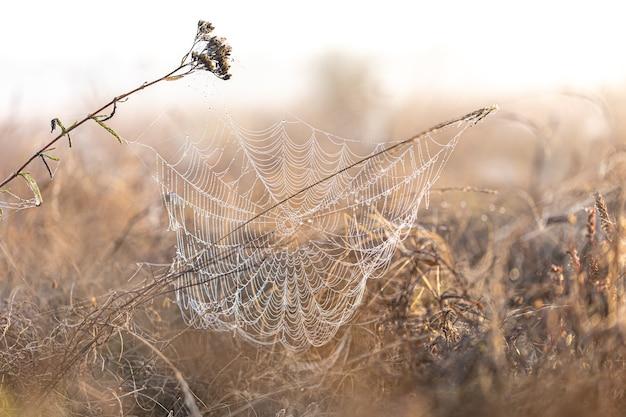 Gran tela de araña hermosa en gotas de rocío al amanecer en el campo.
