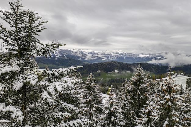 Gran vista de colinas y abetos cubiertos de nieve