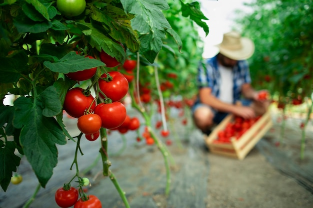 Granja de alimentos orgánicos