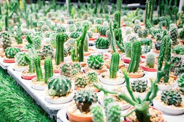 Granja de cactus para plantar variedad de especies.