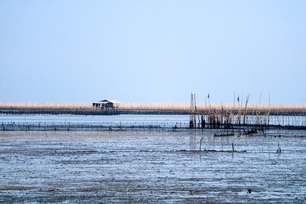 Granja de mejillones en el mar a lo largo del bosque de manglar