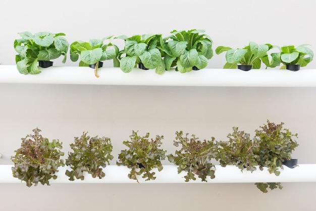 10 claves para construir un invernadero hidrop nico - Hortalizas