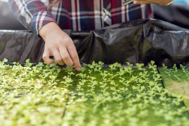 Granja de vegetales hidropónicos. hermoso agricultor asiático que estudia el cultivo y análisis de hortalizas hidropónicas