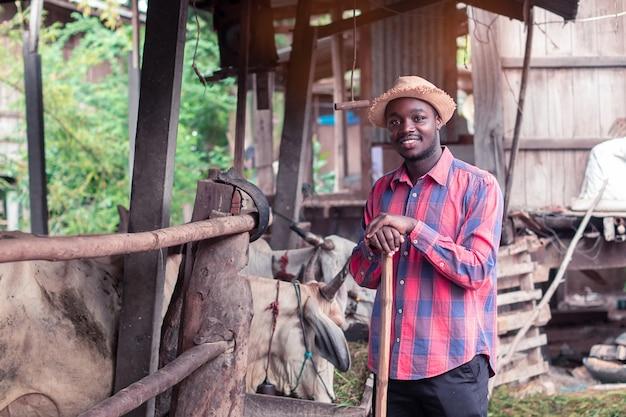 Granjero africano alimentando vacas con hierba en la granja