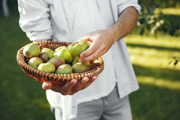 Granjero alegre con manzanas orgánicas en el jardín. frutas verdes en canasta de mimbre.