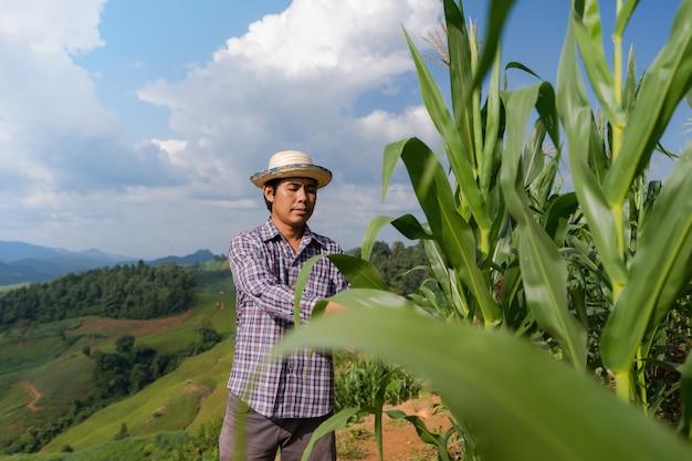 Granjero asiático que controla las plantas en su granja en campo de maíz bajo el cielo azul en verano
