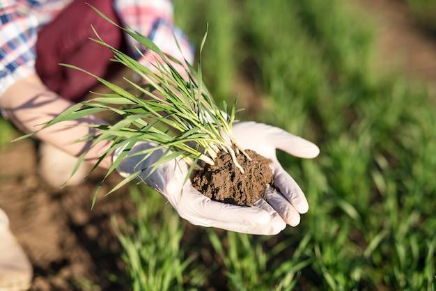 Granjero con cultivos en el campo.