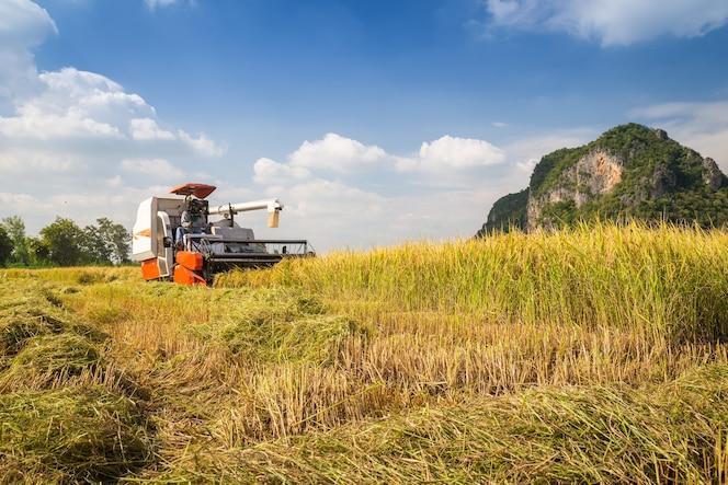 Granjero de cosecha por cosechadora
