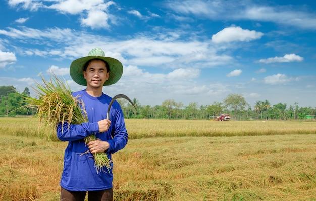 Granjero feliz cosecha arroz en el campo de arroz tailandia