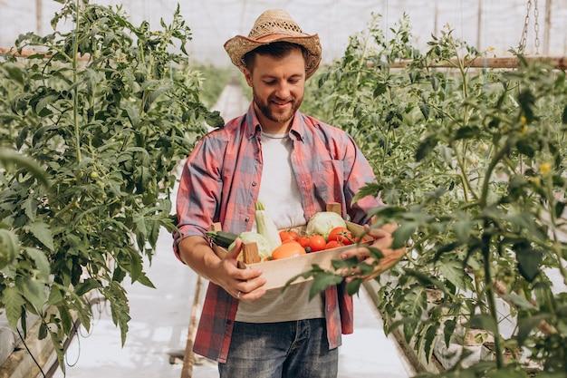 Granjero en invernadero con caja de verduras