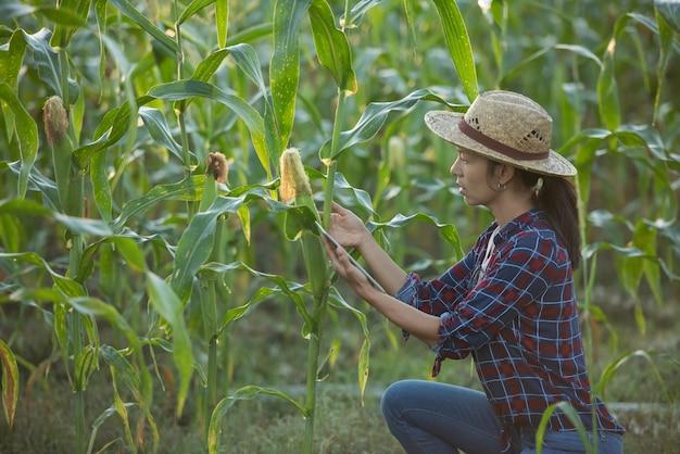 Granjero de mujer asiática con tableta digital en campo de maíz, hermoso amanecer sobre el campo de maíz. campo de maíz verde en el jardín agrícola y la luz brilla al atardecer en la noche fondo de montaña