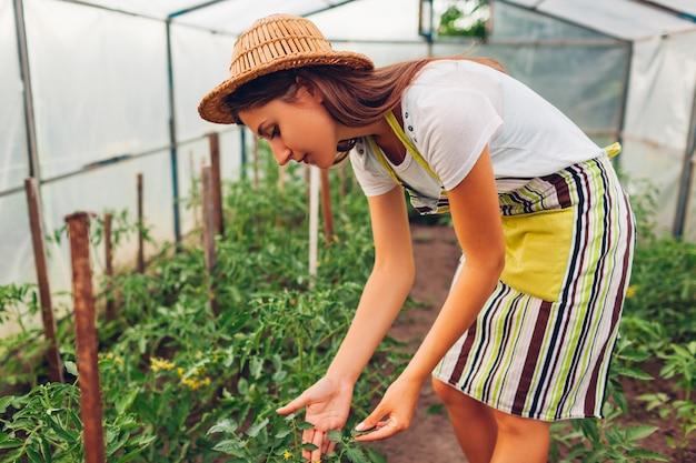 Granjero de la mujer que mira los almácigos del tomate que crecen en invernadero. trabajador que controla verduras en invernadero.