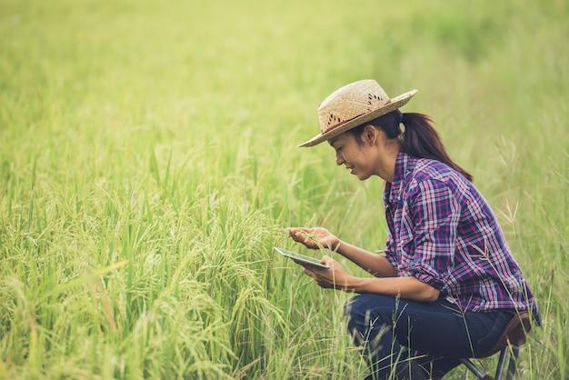Granjero de pie en un campo de arroz con una tableta.