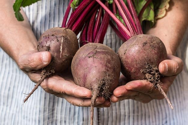 Granjero con remolacha fresca hortalizas cosecha